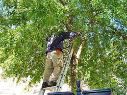 Coppell TX Tree Care